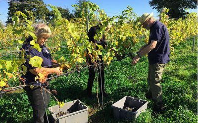 Norfolk Vineyards and Vineyard Tours